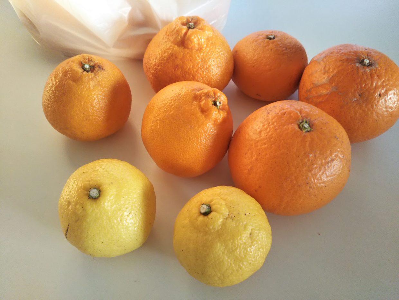 周防大島の柑橘類